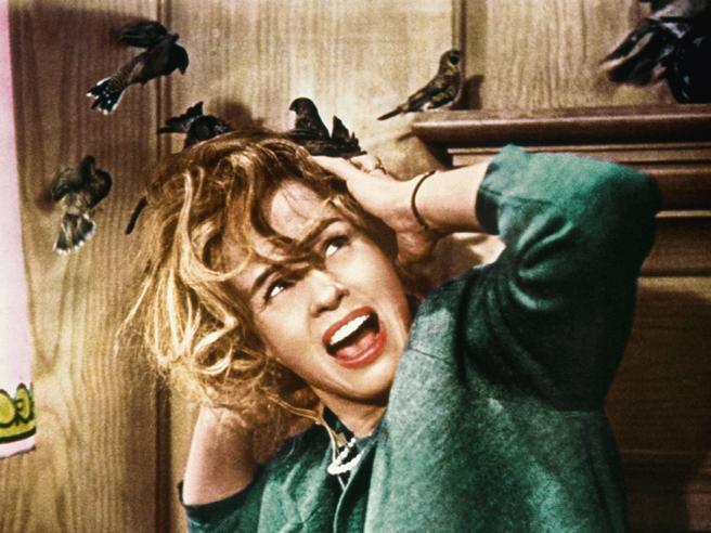 Attaccata da  corvo a beccate  in testa giornalista finisce in ospedale