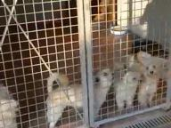 Cani annegati, rinviato il processo Spunta nuovo video sui cuccioli
