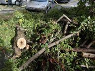 Salaria, albero caduto blocca il traffico fino alla tangenziale est