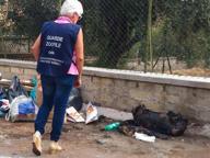 Cane torturato e bruciato: appello dell'Oipa per trovare i responsabili