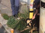 Cane abbandonato e legato a un palo del bus: adottato grazie alla polizia
