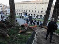 Piazza Venezia: grosso ramo crolla sul marciapiedi, nessun ferito