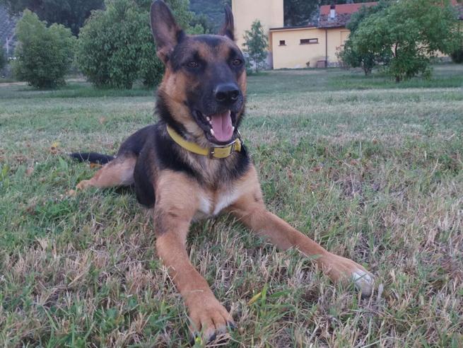 Barbiturici ai giardini di piazza Vittorio: cane muore intossicato