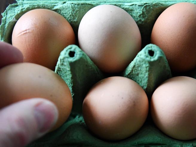 Uova contaminate  da Fipronil: salgono a cinque i casi italiani|Le cose da sapere