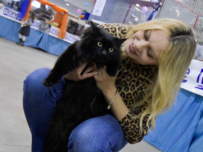 Supercatshow, anche Anna Falchi alla Fiera dedicata ai gatti più belli del  mondo