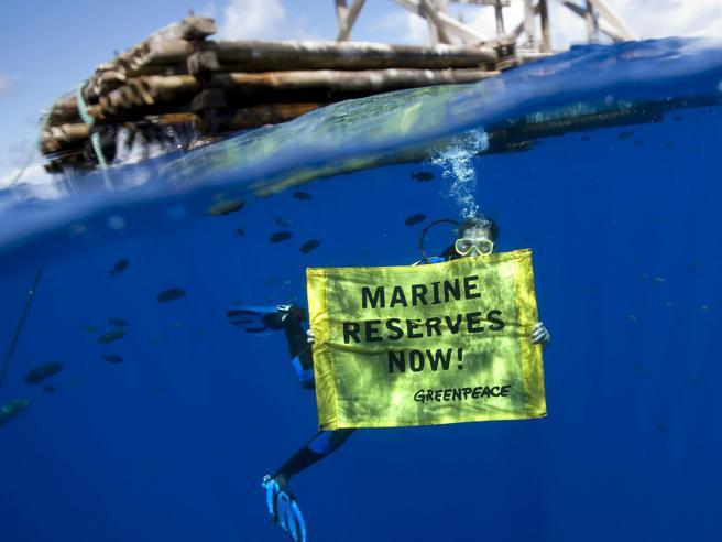 Greenpeace e l'offerta di lavoro: l'Ong cerca un eco-investigatore
