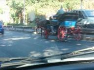 Botticelle a tutto gas con i cavalli al trotto «I vetturini scoperti saranno multati»