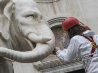 Elefantino sfregiato: i tecnici studiano come riattaccare la zanna