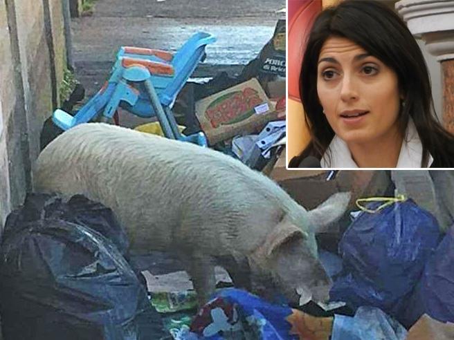 Raggi: il maiale tra i rifiuti in strada è di un Casamonica Video
